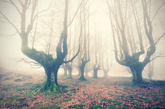 Spooky forest. With vintage filter effect royalty free stock photography