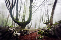 Spooky forest Royalty Free Stock Photography