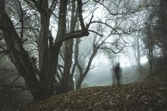 A spooky, ghostly figure on a path in a foggy forest in winter with a dark muted edit stock images