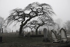 Spooky graveyard scene with scary trees a royalty free stock image
