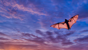 Spooky Halloween background with flying fox. Halloween night with bat flying over purple sky Royalty Free Stock Image