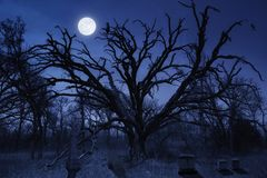 Spooky Halloween Cemetery With Owl and Full Moon. This spooky night time Halloween cemetery with a watching owl and full moon makes a great illustration for this Stock Photos