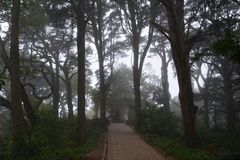 Spooky halloween forest in the morning light. Sintra. Portugal. Spooky halloween forest in the morning light Royalty Free Stock Images