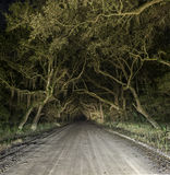 Spooky haunted eerie country dirt road Royalty Free Stock Images