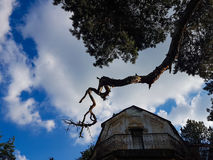 Spooky house. Abandoned house with a tree branch over it Royalty Free Stock Photo