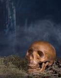 Spooky Human Skull Royalty Free Stock Photo
