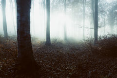 Spooky light in foggy forest Stock Images