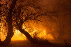 Spooky lights in autumn  forest at night Stock Photo