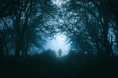 A spooky lone hooded figure in a eerie misty winter forest with a dark muted edit.  stock photos