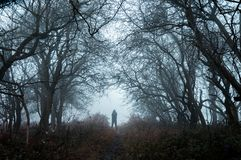 A spooky lone hooded figure in a misty winter forest with a dark muted edit.  stock photography