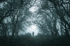 A spooky lone hooded figure on a path in a foggy forest in winter with a dark muted edit.  stock photos