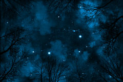 Spooky low angle view trough trees to starry night sky with blue nebula. Spooky low angle view through trees up to starry night sky with blue nebula Royalty Free Stock Image