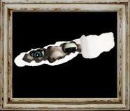 Spooky manikin. Stock Photography