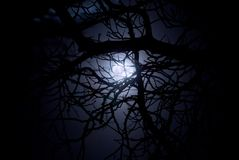 Spooky midnight moonlight. Spooky moonlight shining through a web of branches Royalty Free Stock Photos
