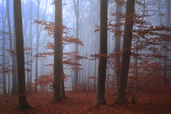 Spooky misty forest during fall Stock Images