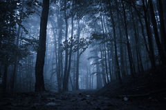 Spooky misty rainy forest Stock Photo