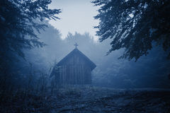 Spooky misty rainy forest Royalty Free Stock Images