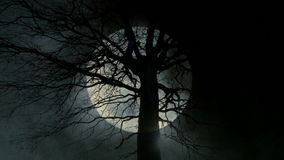 Spooky moon night background. tree silhouette. Time lapse of moon raising behind tree. Spooky moon night background stock video