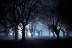 Spooky night. This mulberry grove near a cemetery is illuminated by the street lights on a winter night; it looks quite spooky