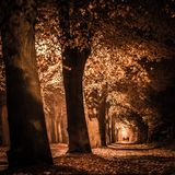 Spooky night alley full of dry leaves in diminishing perspective Royalty Free Stock Image