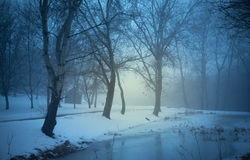 Spooky night in the nature Stock Photography