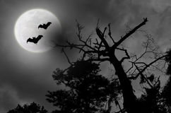 Spooky Night Sky Cloudy Full Moon Bats. Spooky cloudy full Moon night scene with a silhouette of trees and two black bats Stock Photo
