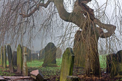 Spooky old cemetery tree on a foggy day Royalty Free Stock Image