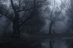 Spooky old forest on cold winter day Stock Images