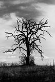 Spooky Old Tree. Black & white image of crooked dead tree silhouetted against grey, ominous clouds Royalty Free Stock Photography
