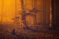 Spooky orange fog into the forest Stock Photos