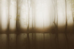 Spooky pond in the middle of a foggy forest. Gloomy dark autumn day. Filtered image Royalty Free Stock Images