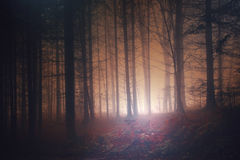 Spooky red colored vintage forest Stock Images