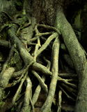 Spooky roots Royalty Free Stock Photos
