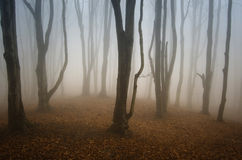 Spooky scary forest with mysterious fog Royalty Free Stock Images