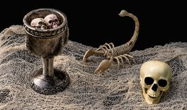 Witch`s Potion Surrounded By Scorpion Skeleton And Skull royalty free stock photo