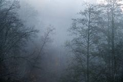 Spooky silhouettes of trees with no leafs on foggy and cold autumn morning stock photos