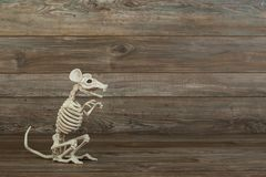 Skeleton rat on wood background royalty free stock photo