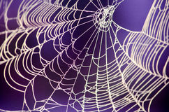 Spooky spider web against a purple background Royalty Free Stock Photos