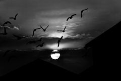 Spooky sunset in bw. Sunset over the silhouette of flying birds and roofs in black and white Royalty Free Stock Images