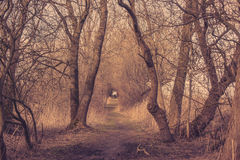 Spooky trail in a forest. In the autumn royalty free stock photos