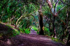 Spooky Trail on Mount Victoria, Wellington, New Zealand. Spooky trail through the woods on Mount Victoria, Wellington, New Zealand, Aotearoa stock photo