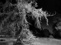 Spooky tree Stock Images