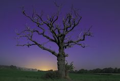 Spooky tree Royalty Free Stock Image