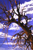 Spooky Tree 4. Spooky old tree against cloudy sky Royalty Free Stock Images