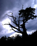 Spooky Tree. Spooky looking tree in a storm Stock Photography