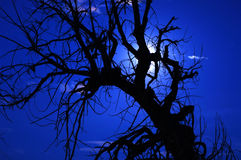 Spooky Tree 7. Spooky old tree against cloudy sky Royalty Free Stock Image