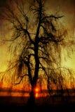 Spooky tree background Stock Image