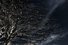 Spooky tree. A bald tree towards a dark clouded sky Stock Photography
