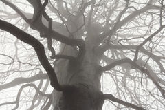 Spooky tree branches Stock Image