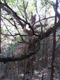 Spooky tree royalty free stock photos